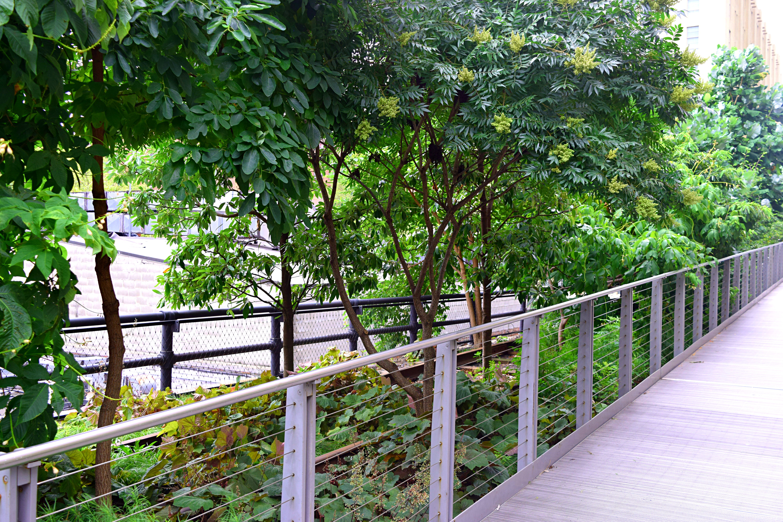Chelsea HL trees